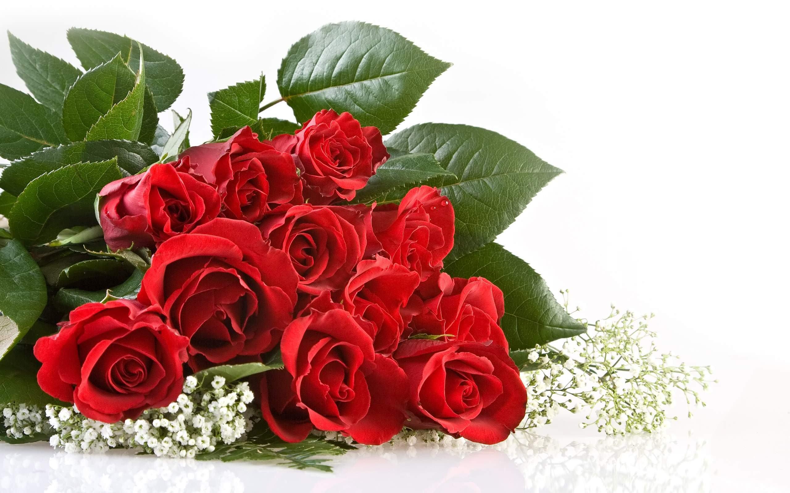 roses12-2.jpg